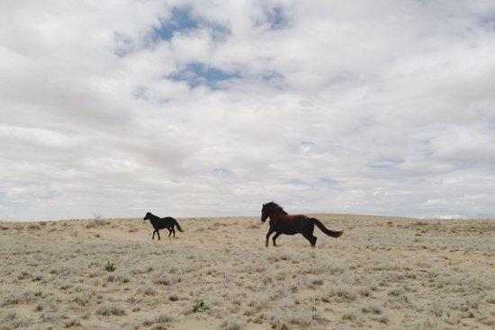 San Juan Horse Run Art Print