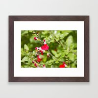 Busy bee in the flowers Framed Art Print