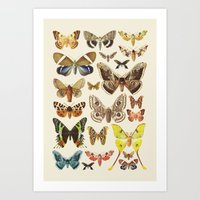 Collection Art Print
