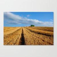 Harvest On Romney Marsh Canvas Print