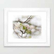 Apple Blossom Branch Framed Art Print
