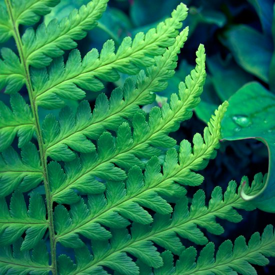green fern abstract VII Art Print