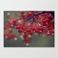 candied Canvas Print