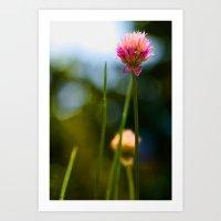Allium2 Art Print