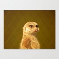 Meerkat Manor Canvas Print