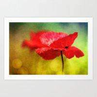 Adorable Poppies... Art Print