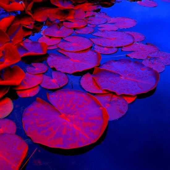 lily pads I Art Print