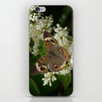 Buckeye iPhone & iPod Skin