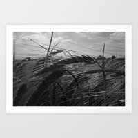 Summer Fields #1 Art Print