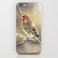 iPhone & iPod Case featuring Rosy Little Finch by Maureen Anne