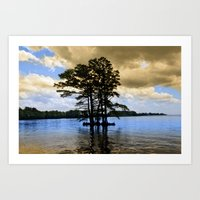 Cypress Trees Art Print