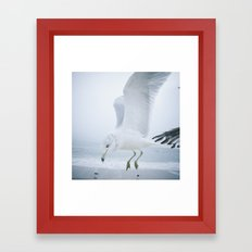 Seagull {One}  Framed Art Print