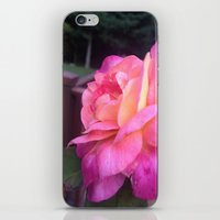 Roses in Rhode Island iPhone & iPod Skin