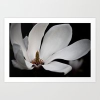Queen Of Peace Magnolia Art Print