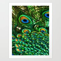 Pretty Peacock Art Print