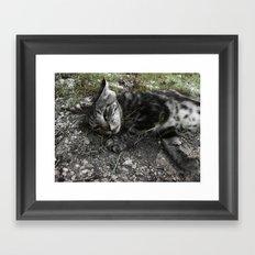 Wild cat Framed Art Print