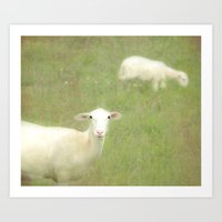 Little lamb, who made thee? Art Print