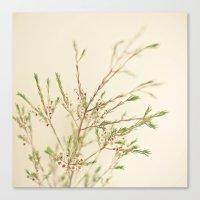 Waxflower Canvas Print