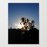 Sand Lilly Sunset Canvas Print