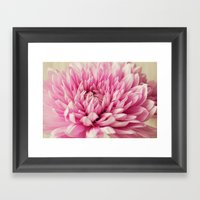 Mums III Framed Art Print