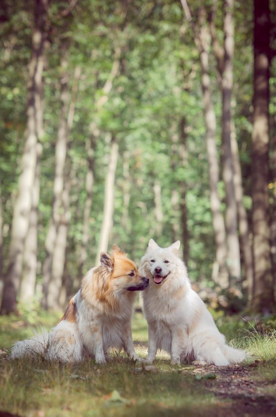give us a peck! the two fellow dogs Canvas Print