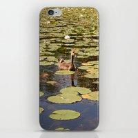 Duck amongst the lillies iPhone & iPod Skin
