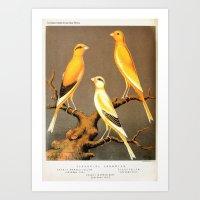 Orange Canaries  Art Print
