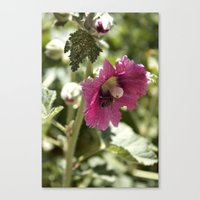 Buzzing Here And There Canvas Print