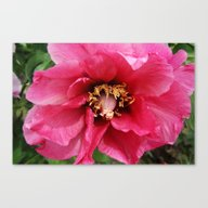 Canvas Print featuring Red Peony by Christiane W. Schulz…