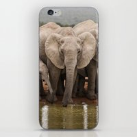 African Elephants iPhone & iPod Skin