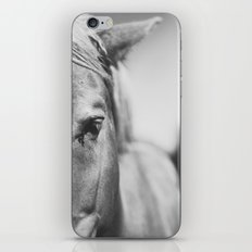 The Spirited Horse iPhone & iPod Skin
