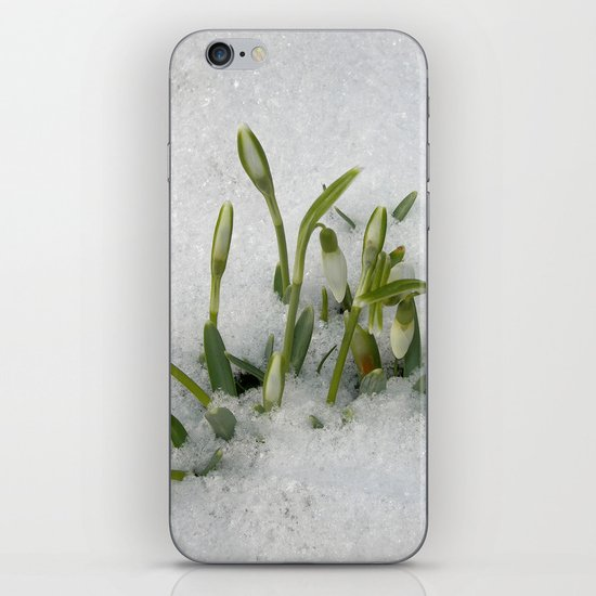snowdrop II iPhone & iPod Skin