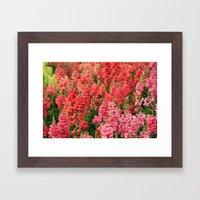 Snapdragons Framed Art Print