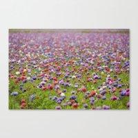 Field Of Anemones Canvas Print