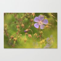 Wild Geranium 3900 Canvas Print