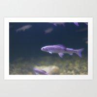 In The Tank: Fish 2 Art Print