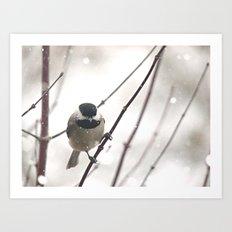 Chickadee in Winter Art Print