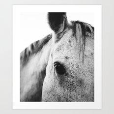 SILVER HORSE Art Print