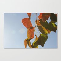 Glowing Leaves Canvas Print