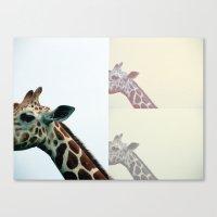 Giraffe. Canvas Print