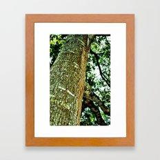 Lookingup Framed Art Print