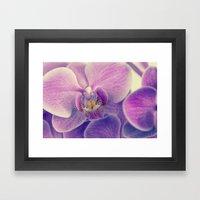 Violet Orchid Framed Art Print
