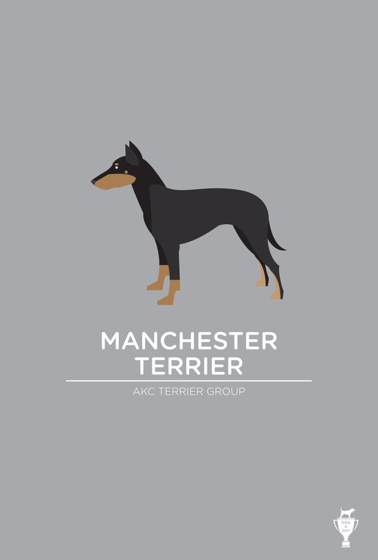 Manchester Terrier Canvas Print