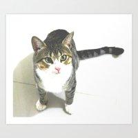 Miojo Cat. Art Print