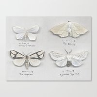 Moth Collection Canvas Print