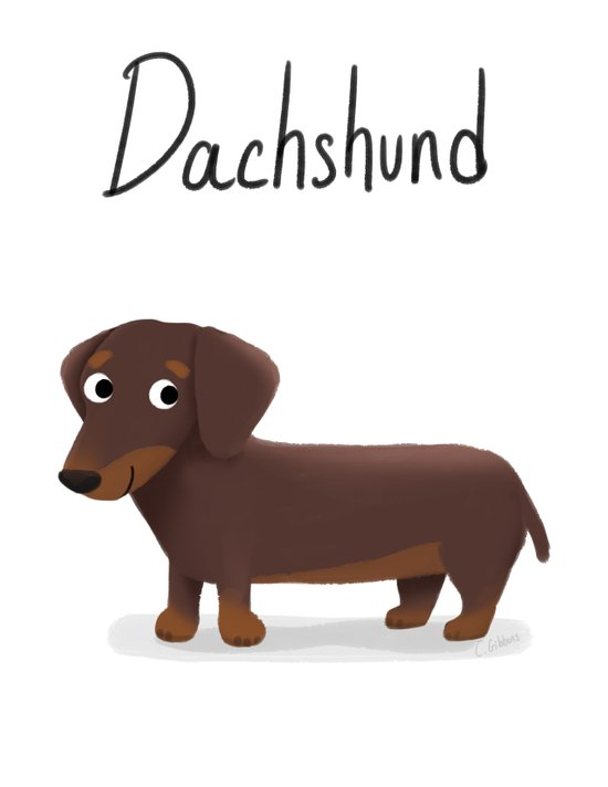 Dachshund - Cute Dog Series Canvas Print