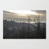 dead trees Canvas Print