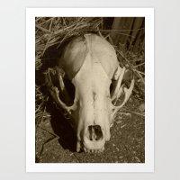raccoon skull V  Art Print
