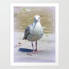 Sammy the Seagull Art Print