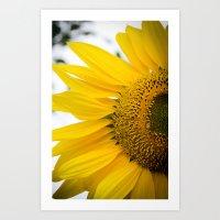 Sunnyflower L Art Print